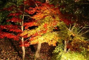 紅葉の森の満開の下1