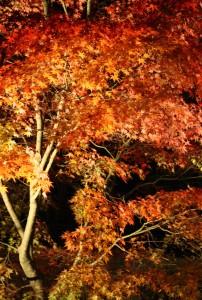 紅葉の森の満開の下2