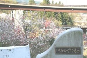 木曽 観光 馬籠 妻籠 はなもも 山桜 2