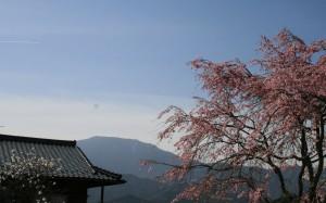 04 馬籠 紅色桜 恵那山 飛行機雲